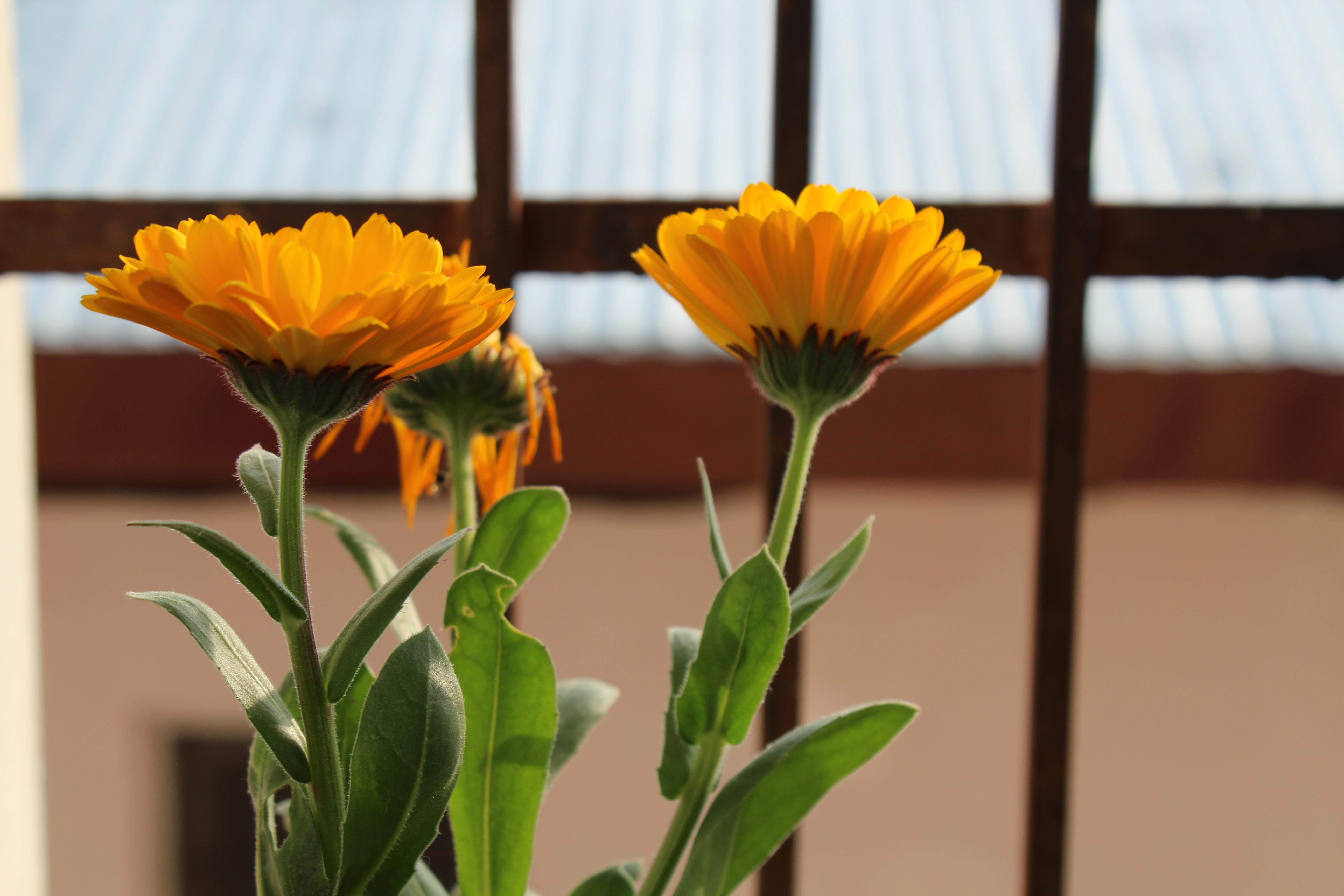 Flower plantation at DLS